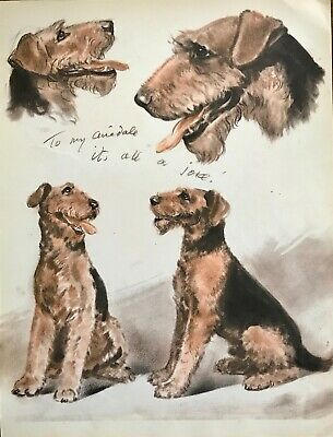 AIREDALE DOG SKETCHES by Diana Thorne 1944 Art Print