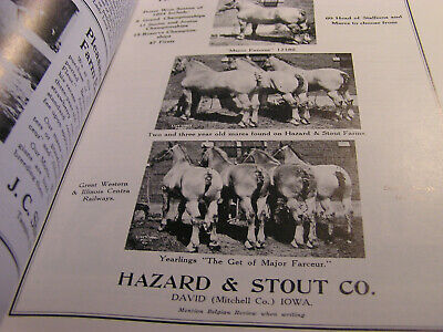 Belgian Horses USA Draft  Working  Show Breeders Coors Brewery Manual Vintage