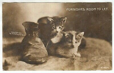 Kittens and Old Shoes 1910s RPPC Real Photo Cat Postcard - C130