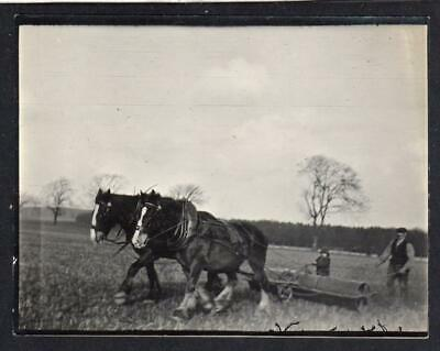 Photograph of working horses pulling a roller (C52757)