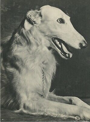BORZOI DOG  Vintage 75 year-old Full Page Photo Print by YLLA