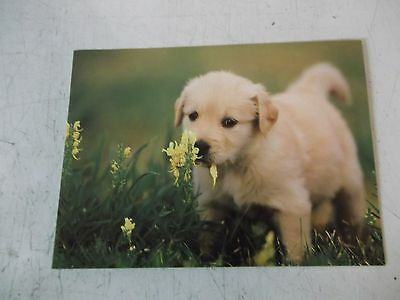 new puppy greeting card for all occasions with envelope.