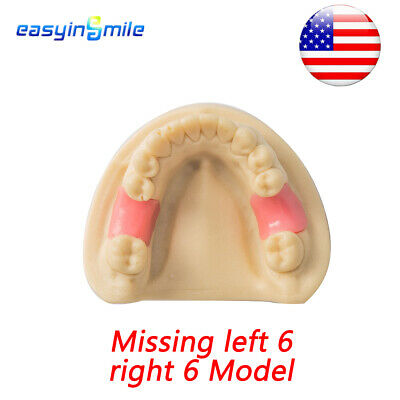 Missing Left 6 & Right 6 Teeth Model Dental Simulation Lower Jaw without Gum 1pc