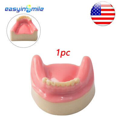 Easyinsmile 1X Dental Lower Jaw 8 Teeth Model Demonstration With Silicon Rubber