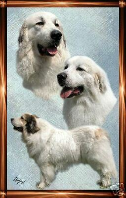 Pyrenean Mountain Dog A6 Dog Notelets By Starprint