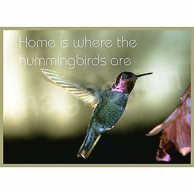 HOME IS WHERE THE HUMMINGBIRDS ARE Refrigerator Magnet