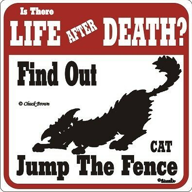 Cat Funny Warning Sign - Different Signs Available