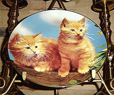 Purrfect Portraits Sugar and Spice Orange Tom Cat GUY WITHERS Plate