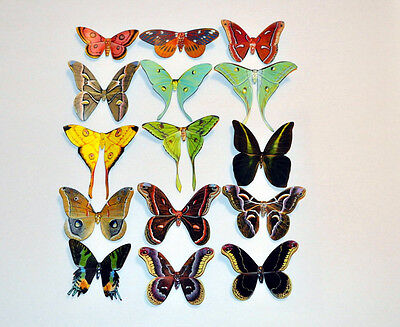 Butterfly Moth Magnets Set of 15 Multi-Color Insects by Refrigerator Magnets