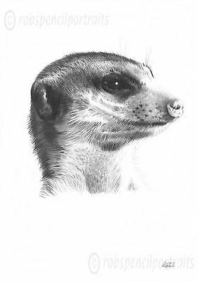 MEERKAT 4 Limited Edition Pencil Drawing Wall Art Print Picture Sketch Animals