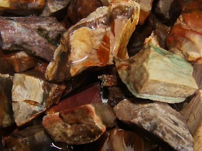 1000 Carat Lots of Unsearched Petrified Wood + a FREE Faceted Gemstone