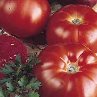 TOMATE SUPER MARMANDE RAF -600 Semillas Seeds