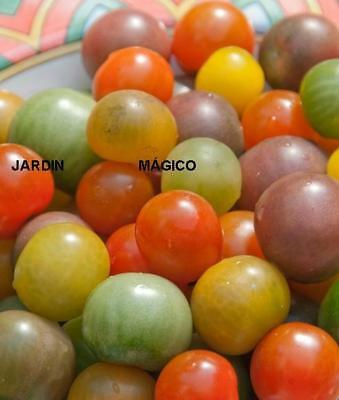 TOMATE CEREZA ARCOIRIS   cherry mix 100  Semillas Seeds