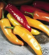 PIMIENTO HUNGARIAN WAX pepper  150 Semillas Seeds