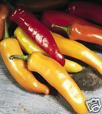 PIMIENTO HUNGARIAN WAX pepper  50 Semillas Seeds