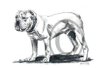 Original, Zeichnung, Old English  Bulldog 001A3, sw