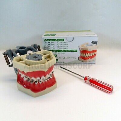 Typodont Dental Educational Practice With Bracket Roth 0.22 Replacable Teeth USA