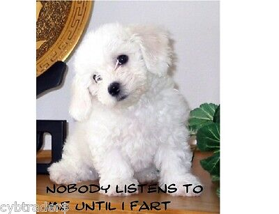 Bichon Frise  Puppy Funny  Refrigerator / Tool Box /  File Cabinet  Magnet