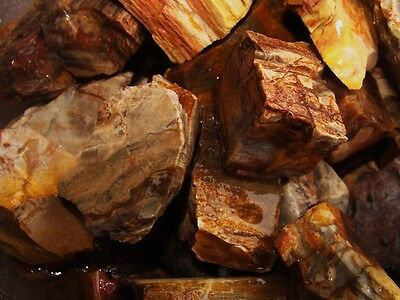 3000 Carat Lots of Unsearched Petrified Wood + a Free Faceted Gemstone