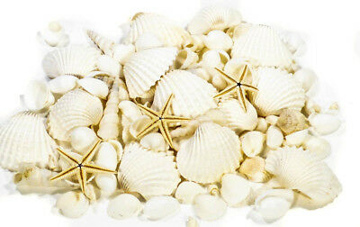 White Shells, Mix Of 400 Gram Mixed White Small Seashells With 3 Baby Starfish