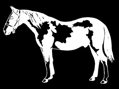 Pinto Horse Decal Equestrain trailer car truck suv window vinyl sticker graphic