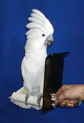 """BITE-GUARD SAFETY PERCH - for NIPPY BIRDS - 1"""" diameter perch for small parrots"""