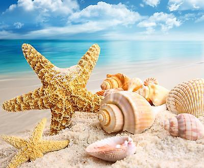 Seashells / Sea Shell - Ocean 8 x 10 / 8x10 GLOSSY Photo Picture