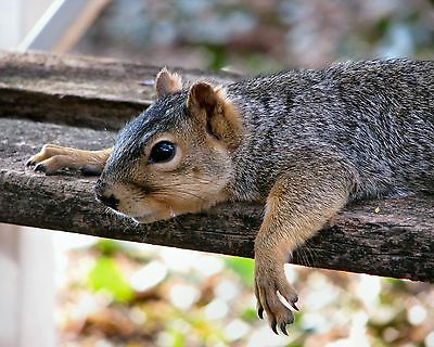 Squirrel / Squirrels 8 x 10 / 8x10 GLOSSY Photo Picture IMAGE #2
