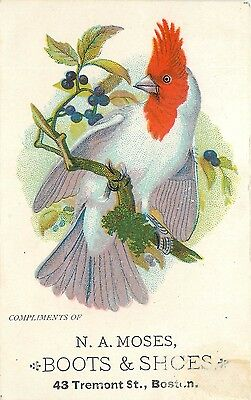 Victorian Trade Card, Red Faced Cockatiel Parrot Bird, N.A. Moses Shoes, Boston