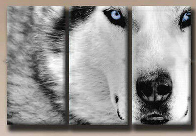 HEAT SELL!MODERN ABSTRACT WALL ART OIL PAINTING ON CANVAS:WOLF (NO FRAME)