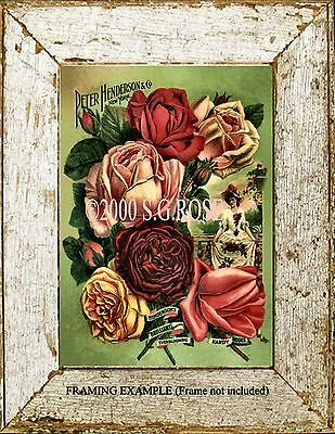 VICTORIAN Old Garden ROSES Peter Henderson & Co. Adv. Antique Vintage ART PRINT