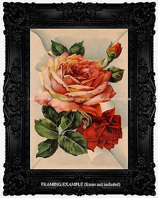 PEACHY PINK CORAL U0026 RED ROSES Chic Romantic Victorian Vintage Antique ART  PRINT