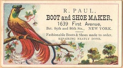 Victorian Trade Card-R Paul Boots & Shoes-New York-Bird of Paradise