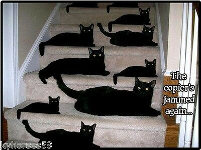 Funny Cat Humor The Copier's Jammed Refrigerator Magnet