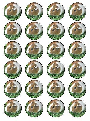 X24 Guinea Pig Cup Cake Toppers Decorations On Edible Rice Paper