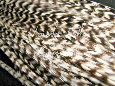 50 XXL ALL THIN WHITING GRIZZLY Eurohackle / Saddle Feather hair extensions