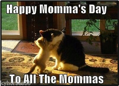 Cat Humor Happy Momma's Day To All Mommas Refrigerator Magnet