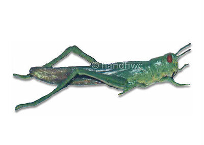 AAA 97446 Grasshopper Toy Model Insect Replica Figurine Prop - NIP