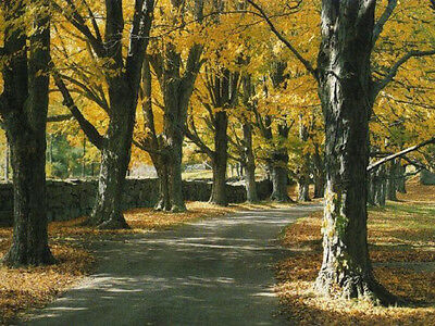 Large Oil painting Golden Autumn landscape with trees in the morning canvas art