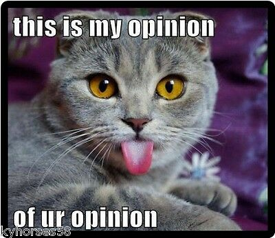 Funny Cat Humor This Is My Opinion Refrigerator Magnet