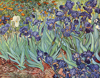 Oil painting Vincent Van Gogh - Irises still life purple flowers hand painted