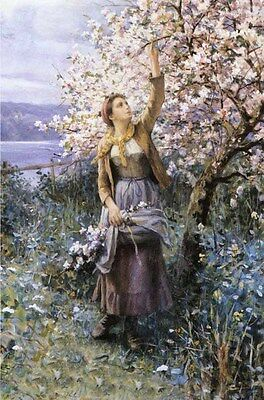 Nice Oil painting nice Young woman Gathering Apple Blossoms in landscape
