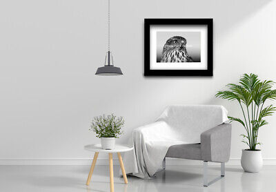 Contemporary Black White Grey Hawk Bird Eyes Wall Art Matted Picture USA A517
