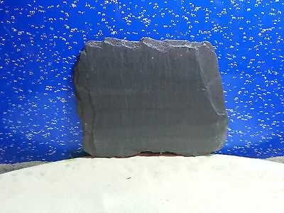 Fennstones flat natural slate piece for vivarium tortoise beak lizard claw trim