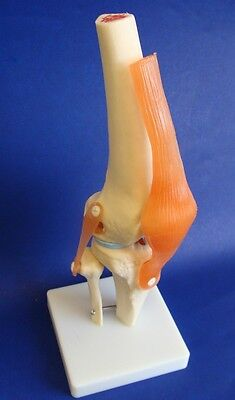 Model Anatomy Professional Medical Knee Joint Life Size IT-010 ARTMED
