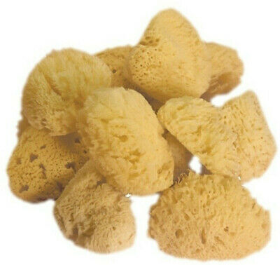 20 LARGE pieces Natural Sea sponges for Artists Crafts Painting Pottery etc.