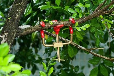 Bonsai Branch Bender Exceptional Wonderful Gyrate Installation Made By Brass