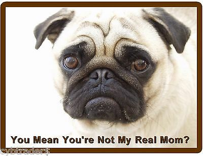 Funny Pug  Dog  Real Mom?  Refrigerator / Tool Box  Magnet Gift Card Insert