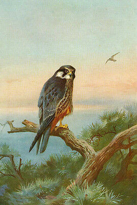 Beautiful no framed Oil painting nice birdhawk on branch by river free shipping