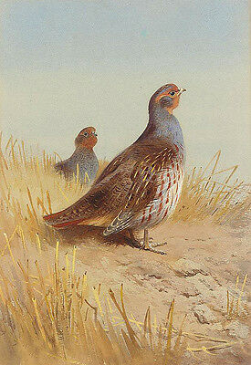 Excellent no framed Oil painting nice birds in summer landscape free shipping